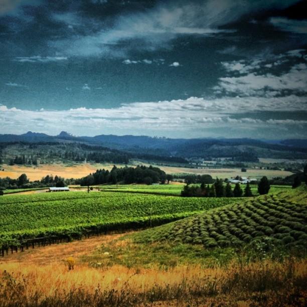 The Vineyards at King Estate